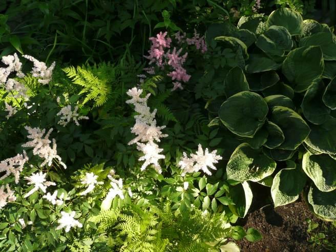 courtyard flora